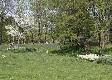 Eine grüne Wiese an der Mosel in Bernkastel-Kues auf dem Kueser Plateau.